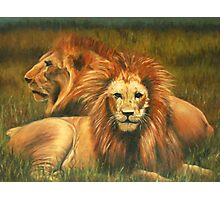 Lions Painting Photographic Print