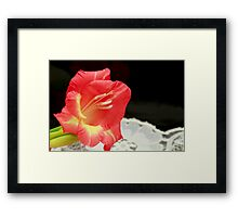 A Single Bloom Framed Print