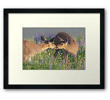 Deer Dear Kisses Framed Print