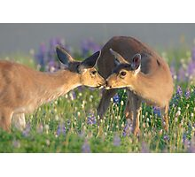 Deer Dear Kisses Photographic Print