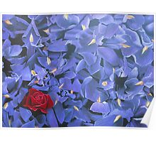 Purple Iris With One Red Rose Poster