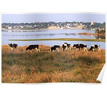The Beauteous Cows of Overton Poster