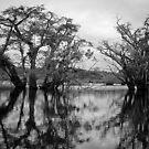 Rainforest by borjoz