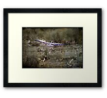 40 Yard Touch-Down Framed Print