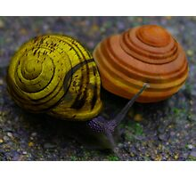 Bannana and Peach Snails Photographic Print