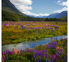 Milford Lupin by Jesse Rowbotham