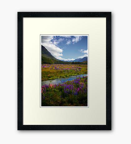 Milford Lupin Framed Print