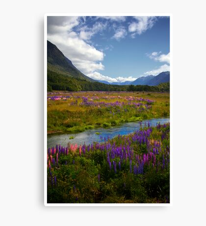 Milford Lupin Canvas Print