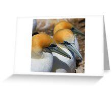 Gannet Talk Greeting Card