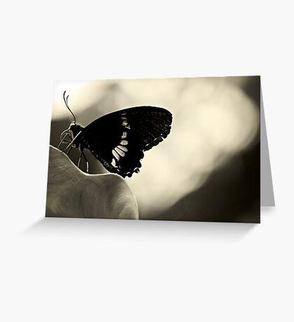 Nectar connoisseur Greeting Card