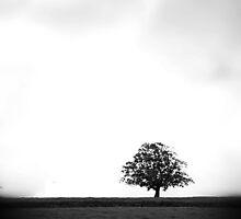 Lonely Tree by Paul  Reece