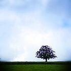 Solitude by Paul  Reece