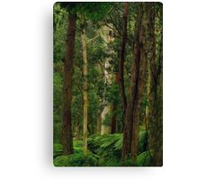 Yarra Forest. Canvas Print