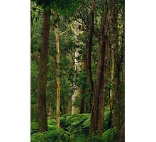 Yarra Forest. Photographic Print