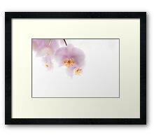Orchid Soft Framed Print