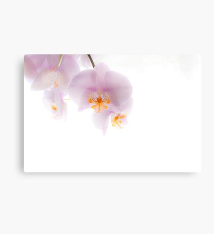 Orchid Soft Canvas Print