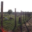 New Fencing by stirlingacre