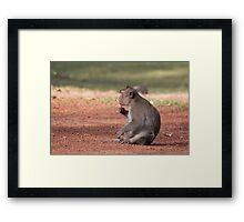 Ice Cream Monkey Framed Print
