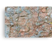 Orkney sandstone and lichen Canvas Print