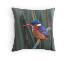 Splash of Colour....... Throw Pillow