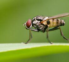 Fly by Sanne Hoekstra