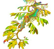 Leafy Sea Dragon  by Carolyn  McFann