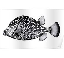 Smooth Trunkfish Coral Reef Fish Poster