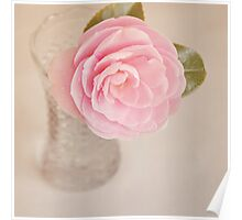 Single pink Camelia Poster