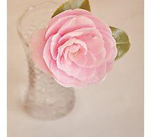 Single pink Camelia Photographic Print