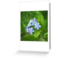 Blue Forget me nots Greeting Card