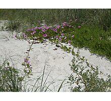 Beach Blossoms Photographic Print