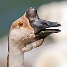 Chinese Goose Portrait by Margaret S Sweeny