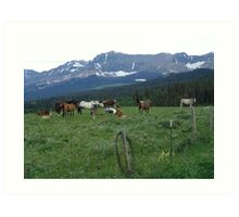 BLACKFOOT HORSE BAND - NEAR BROWNING, MT Art Print