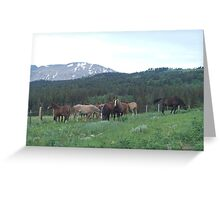 THE BLACKFOOT BAND AND THE SORREL STUD - Near Browning, MT Greeting Card