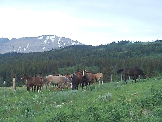 THE BLACKFOOT BAND AND THE SORREL STUD - Near Browning, MT by May Lattanzio