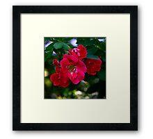 """""""Rose"""" Framed Print"""