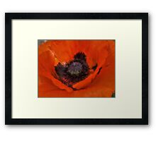 Soft Dreamy Poppy Framed Print
