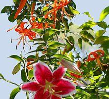 Beautiful Lily's by Tony Weatherman