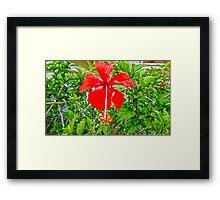 flower petals Framed Print