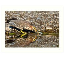 Juvenile Green Heron Fishing Art Print