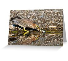 Juvenile Green Heron Fishing Greeting Card