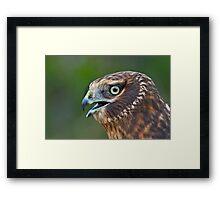 Northern Harrier Portrait Framed Print