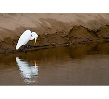 Great Egret Fishing Photographic Print