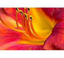 Graceful Daylily  Photographic Print