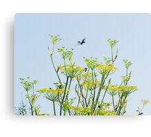 Fennel Flowers and Wasps Canvas Print