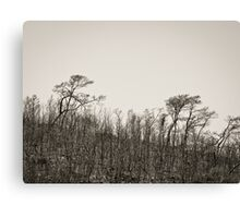 Burnt earth Canvas Print
