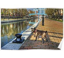 The HDR Terrier....Salford Quays Poster