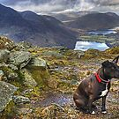 The HDR Terrier....Fleetwith Pike by VoluntaryRanger