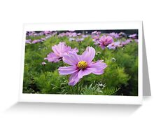 Beautiful Pink!  Greeting Card