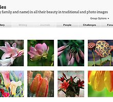 All Glorious Lilies Features July 17th 2012 by Marilyn Cornwell